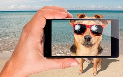 Top 5 Free Stock Photography Websites for Pet Businesses