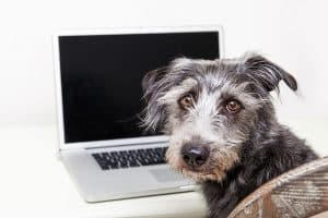 10 Must-Haves for Your Pet Sitting or Dog Walking Website