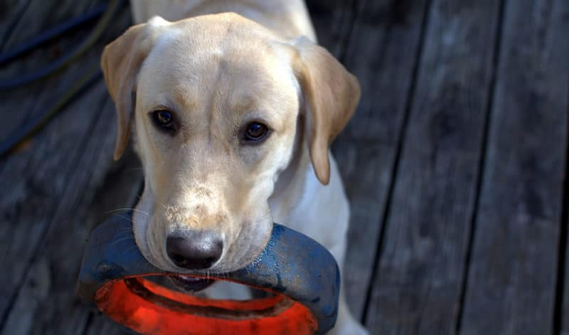 Watch Your Language: Key Phrases for Pet Business Marketing