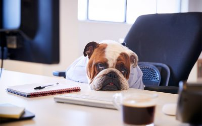 How to Boost Conversions on Your Pet Sitting Website