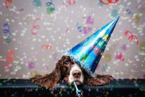 5 New Year Resolutions for Pet Business Owners in 2019